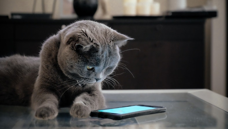6 Best Cat Apps for Android, because why not?